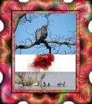 Essai pigeon et cadre_200.jpg